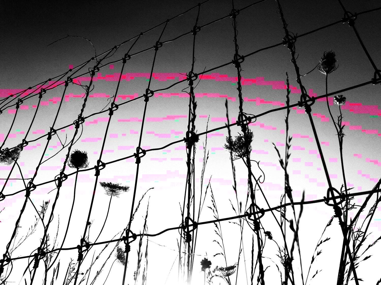 fence sunset-01.jpeg