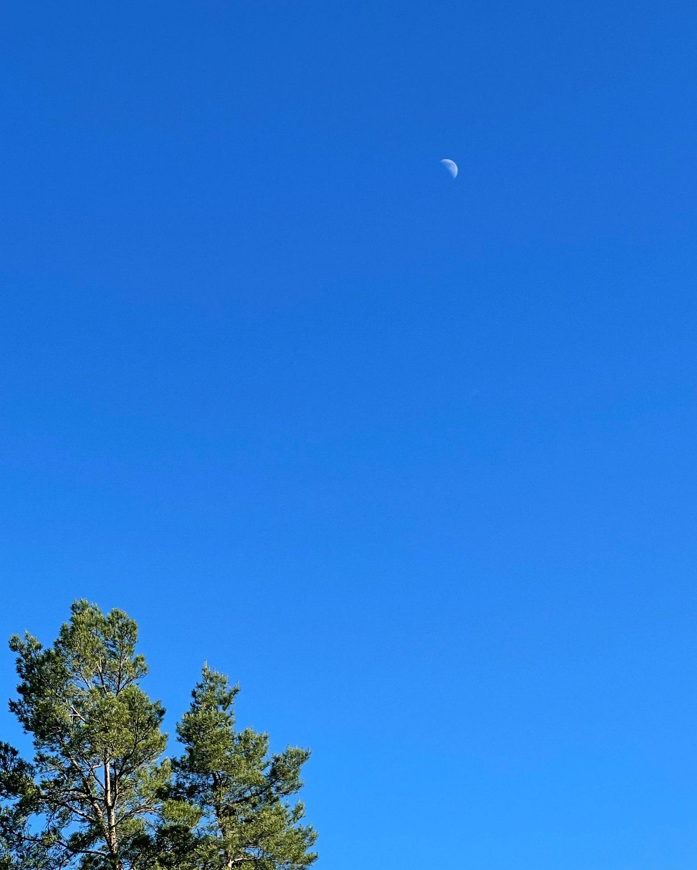 moon_and_blue_sky_2021-06-17.jpg