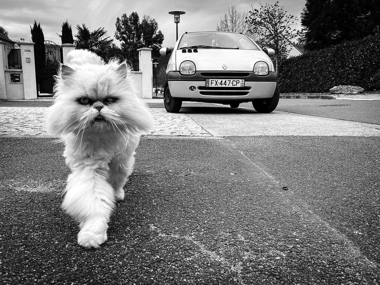 sdimbourcat.jpeg