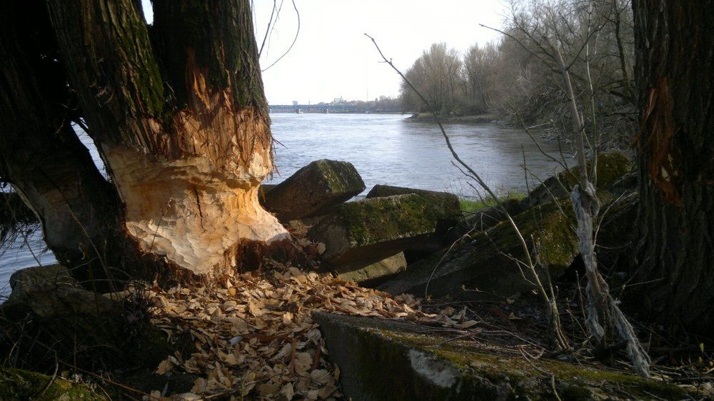 Vistula river left bank.jpg